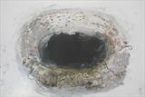Birds nest by Philippa Sibert, Artist Print, Monotype